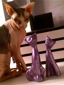 Photos cannot capture the cuteness of the Sphynx or the sparkle of the glitter!