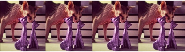 The Sphynx And her Purple Glitter Friends